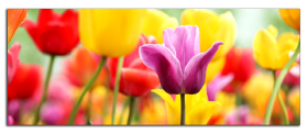 Obrazy tulipány 1056