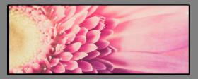 Obrazy různý květy 1061