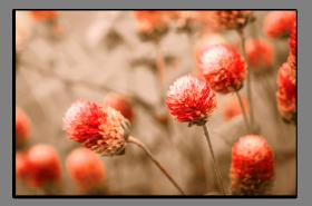 Obrazy různý květy 1066