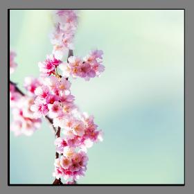 Obrazy různý květy 1068