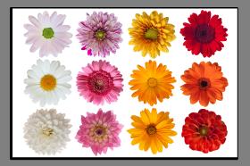 Obrazy různý květy 1070