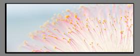 Obrazy různý květy 1073