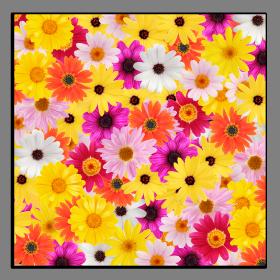 Obrazy různý květy 1074