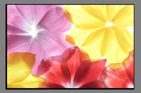 Obrazy různý květy 1077