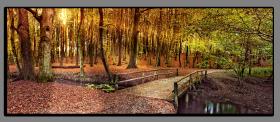 Obrazy stromy 1080
