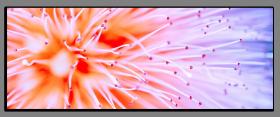 Obrazy různý květy 1082