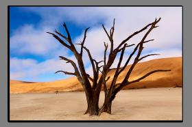 Obrazy stromy 1083