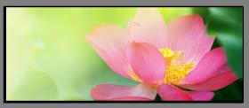 Obrazy různý květy 1085