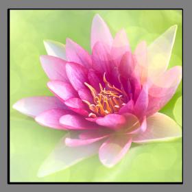 Obrazy různý květy 1086