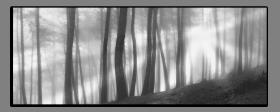 Obrazy čistě černobílý 1103