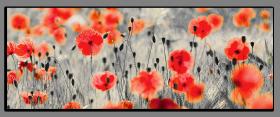 Obrazy s barevným detailem 1114