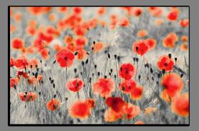 Obrazy s barevným detailem 1115