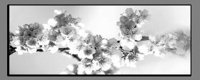 Obrazy čistě černobílý 1122