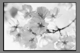 Obrazy různý květy 1134