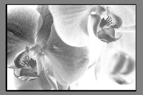 Obrazy čistě černobílý 1136