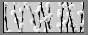 Obrazy čistě černobílý 1137