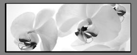 Obrazy orchidey 1155