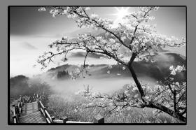Obrazy čistě černobílý 1159