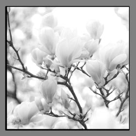 Obrazy čistě černobílý 1165