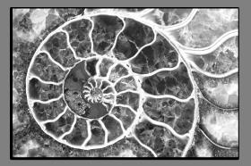 Obrazy čistě černobílý 1169