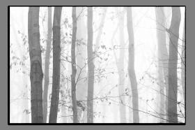 Obrazy čistě černobílý 1174