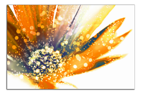 Obrazy různý květy 1183