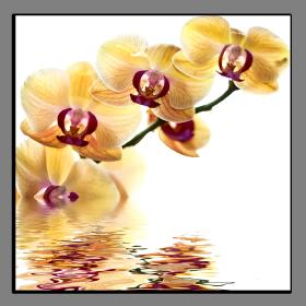 Obrazy orchidey 1194