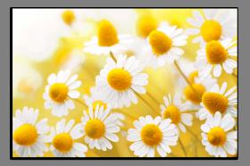 Obrazy různý květy 1199