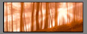 Obrazy stromy 1208