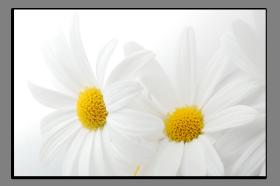Obrazy květy 1209