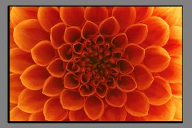 Obrazy květy 1216