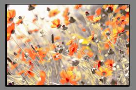 Obrazy různý květy 1220