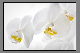Obrazy orchidey 1235