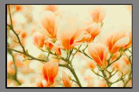 Obrazy různý květy 1245