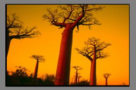 Obrazy stromy 1249