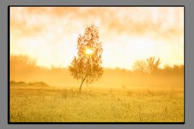 Obrazy stromy 1252