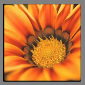 Obrazy květy 1254