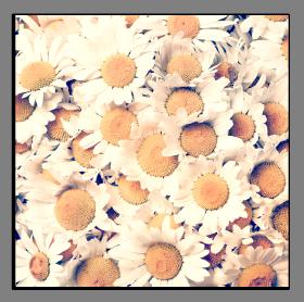 Obrazy květy 1257