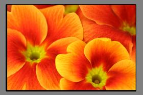 Obrazy květy 1260