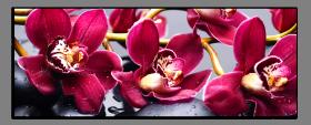 Obrazy orchidey 1273