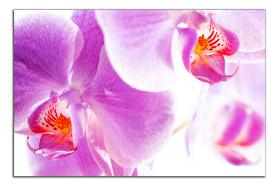 Obrazy orchidey 1276