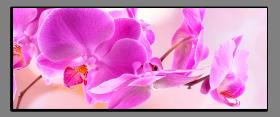 Obrazy orchidey 1279