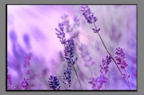 Obrazy různý květy 1288