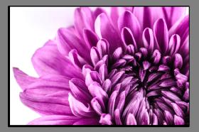 Obrazy květy 1290