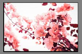 Obrazy různý květy 1292