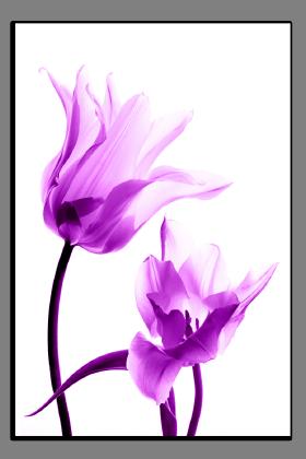 Obrazy tulipány 1293