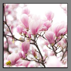Obrazy různý květy 1299