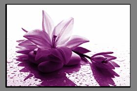 Obrazy různý květy 1300