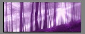 Obrazy stromy 1301