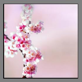 Obrazy různý květy 1320